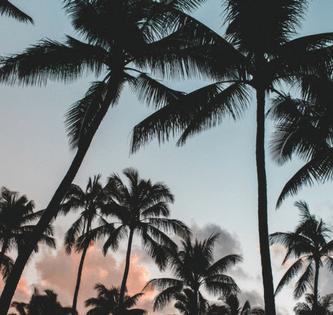 Palmeras de cocos